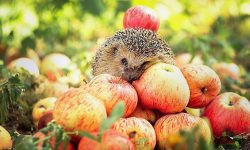Hedgehog full hd wallpapers