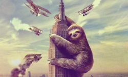 Sloth full hd wallpapers