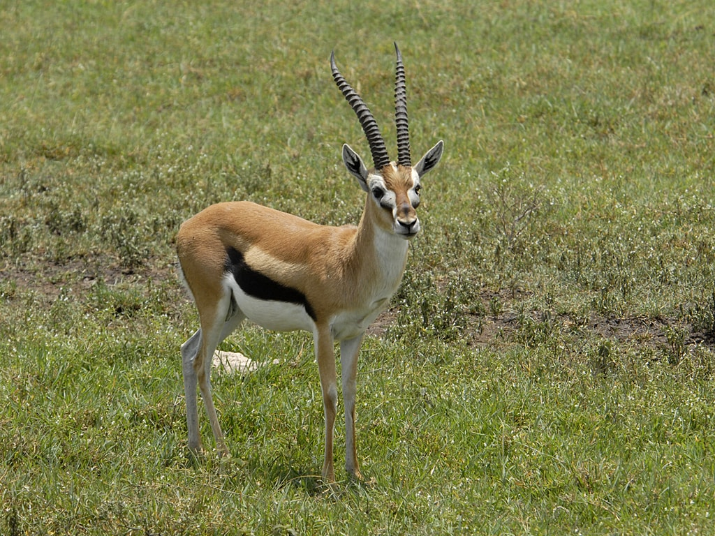 Springbok full hd wallpapers