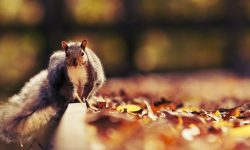 Squirrel full hd wallpapers