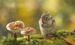 Chipmunk widescreen wallpapers