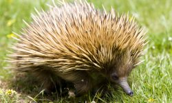 Echidna widescreen wallpapers