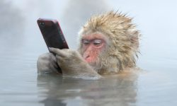 Macaque widescreen wallpapers