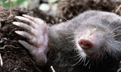 Mole widescreen wallpapers