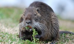 Nutria widescreen wallpapers