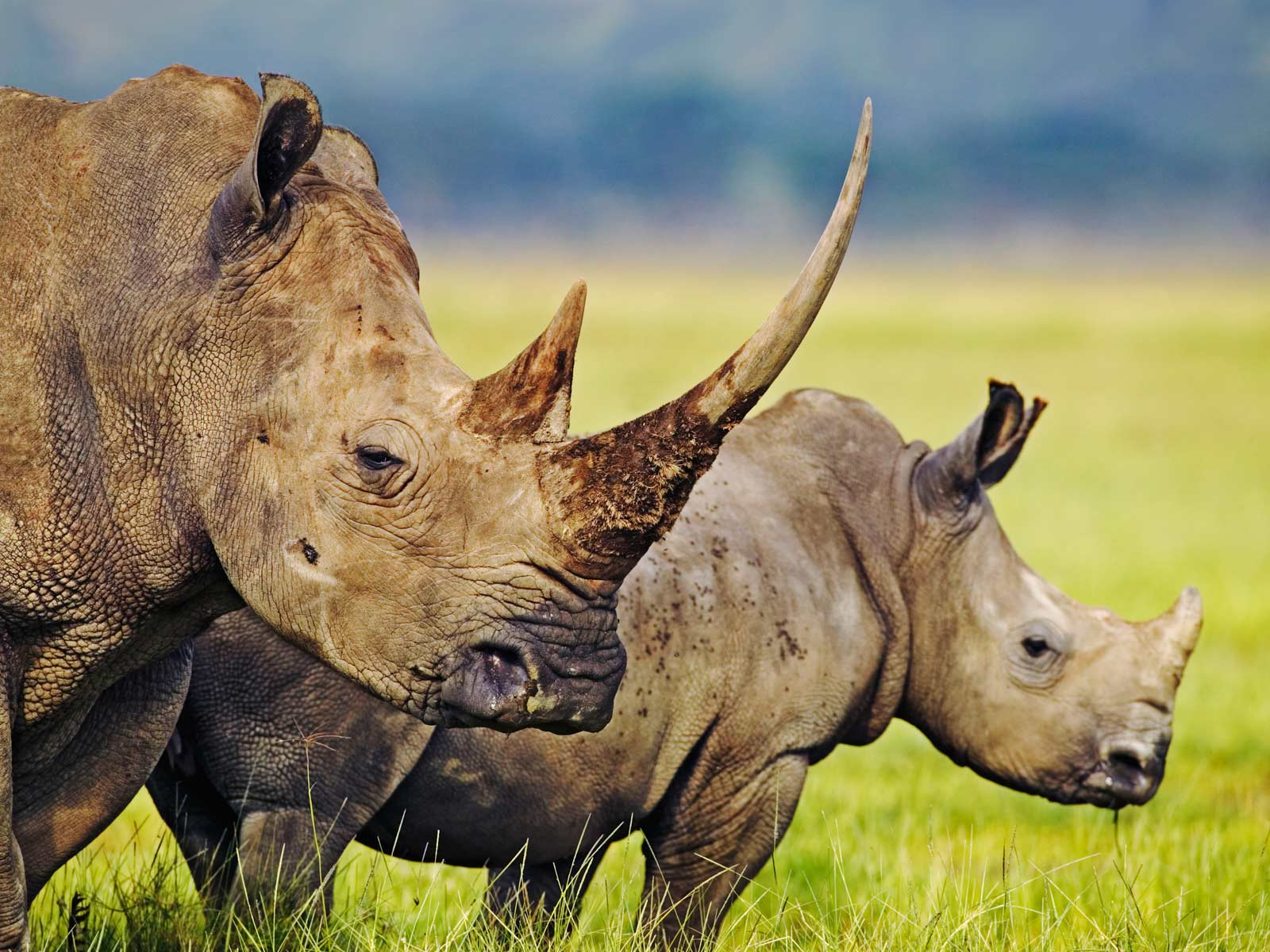 Rhinoceros widescreen wallpapers