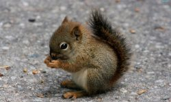 Squirrel widescreen wallpapers