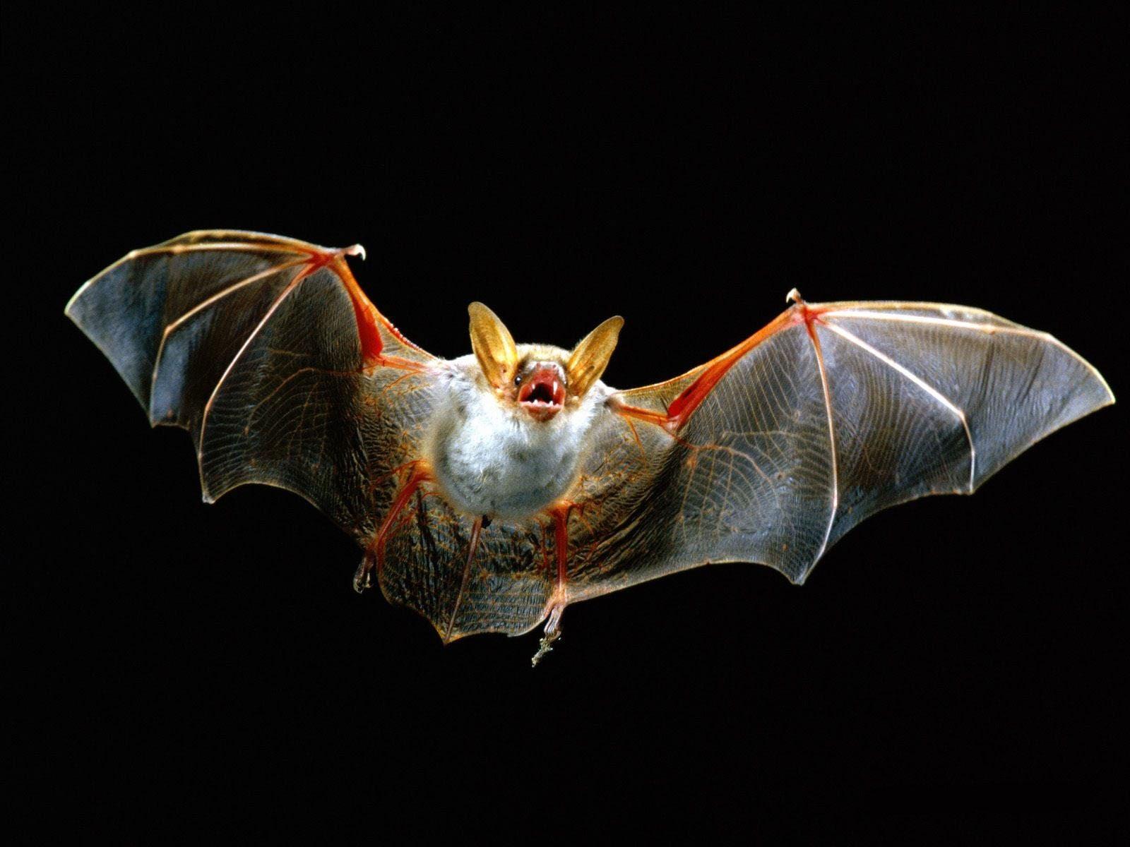 Bat for mobile