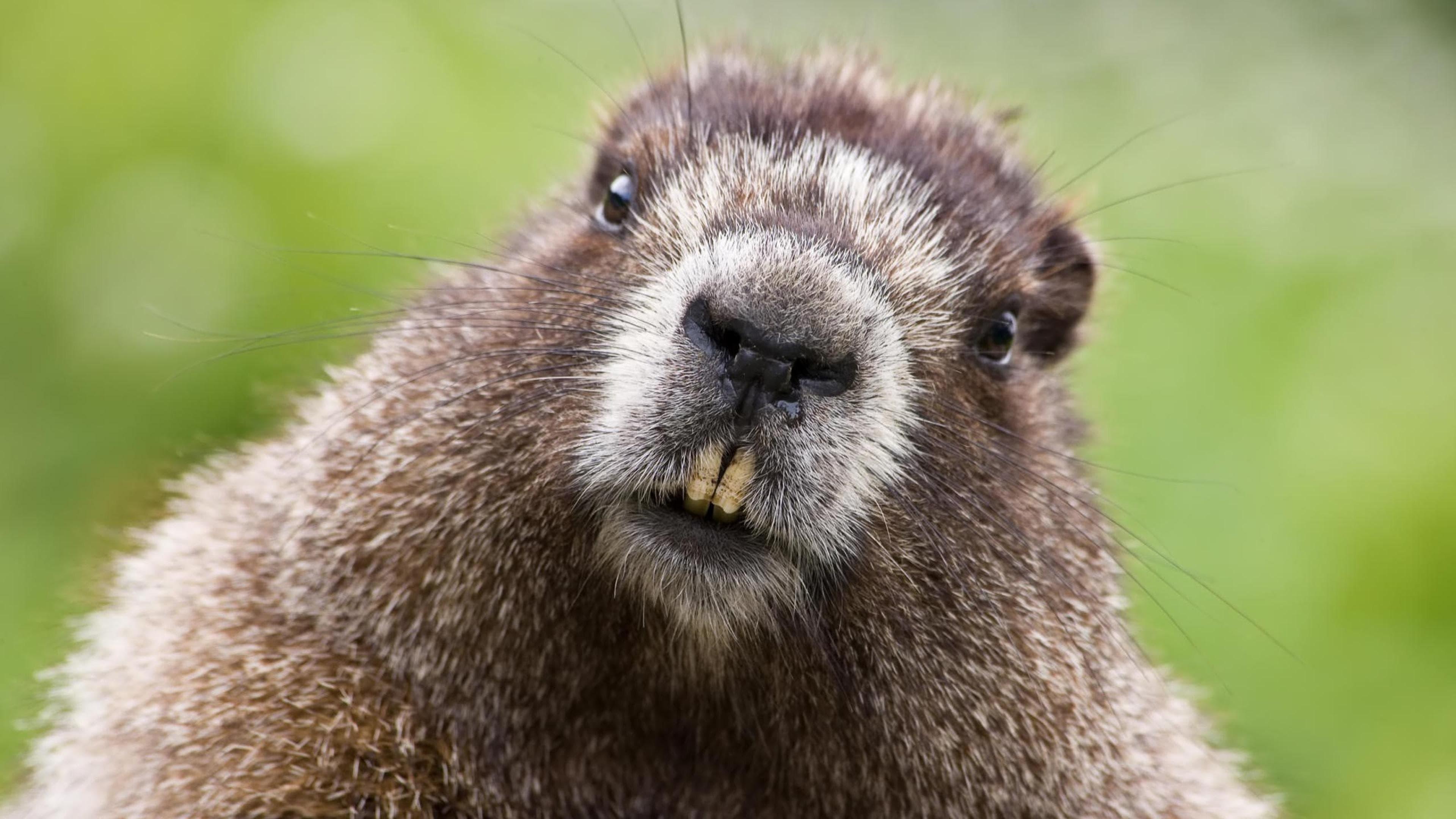 Beaver for mobile