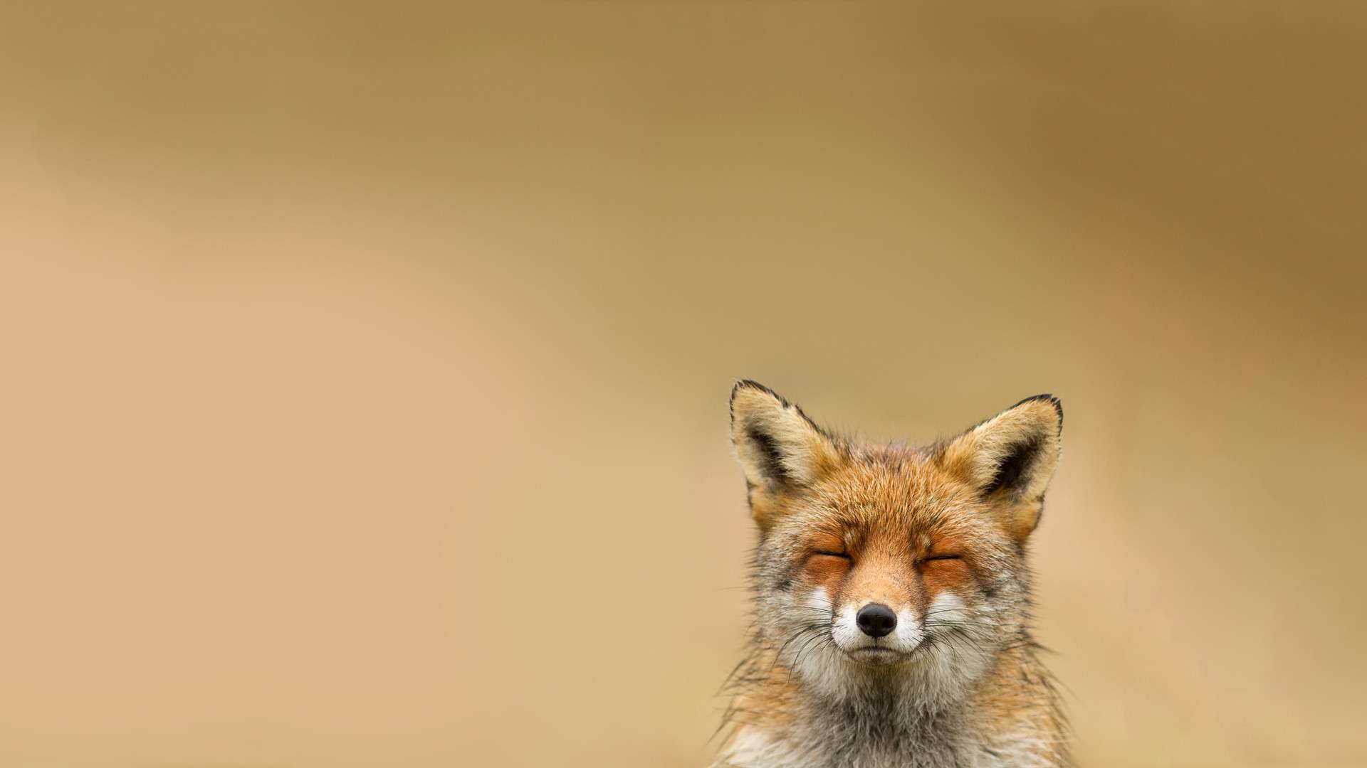 Fox for mobile