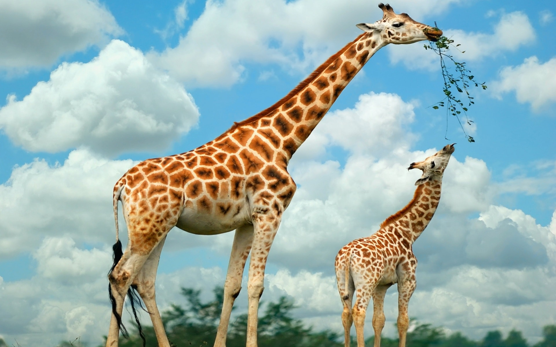 Giraffe for mobile