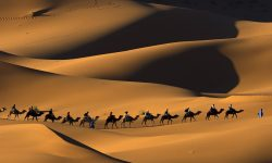 Camel widescreen for desktop