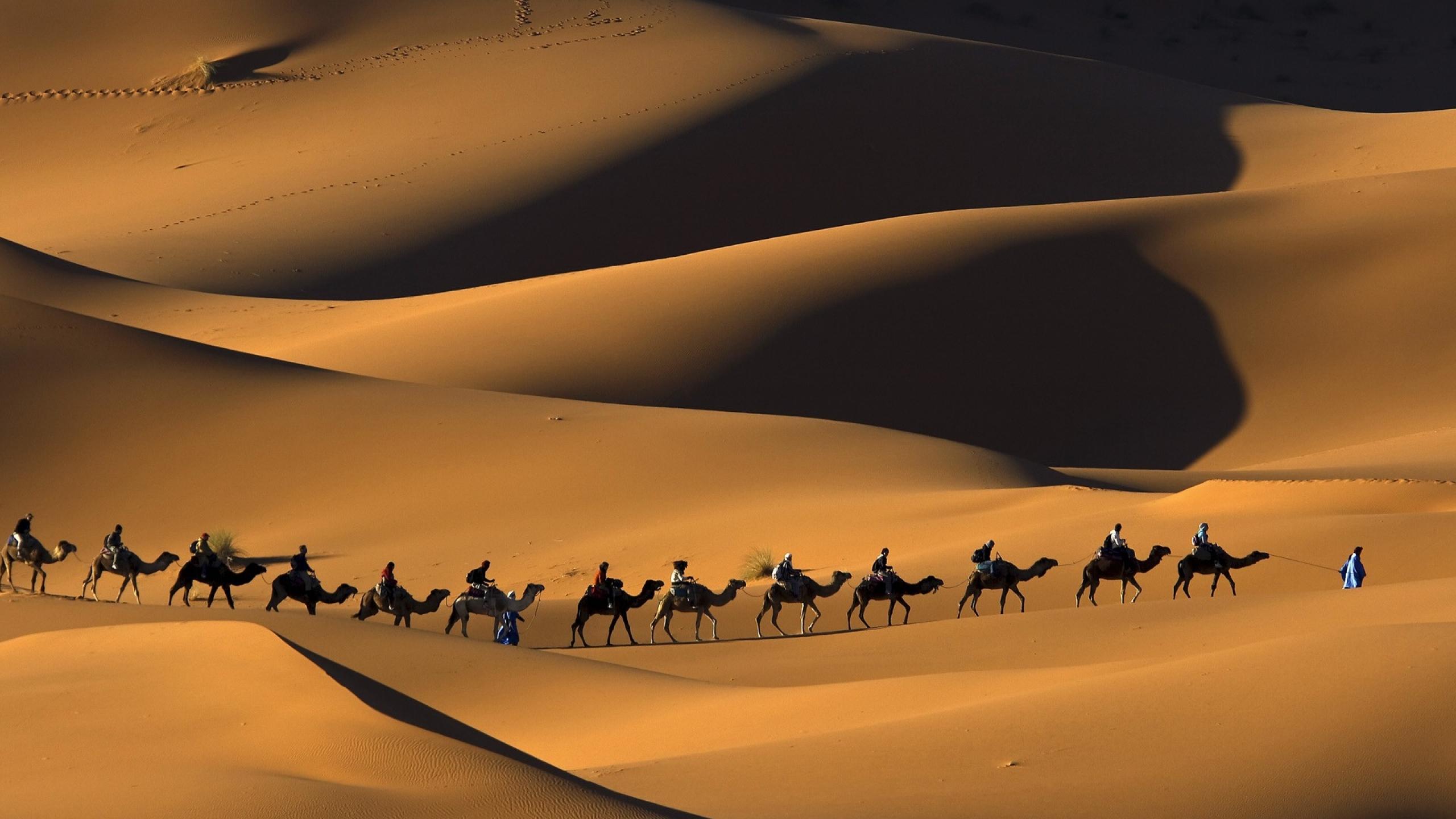 Camel widescreen for desktop