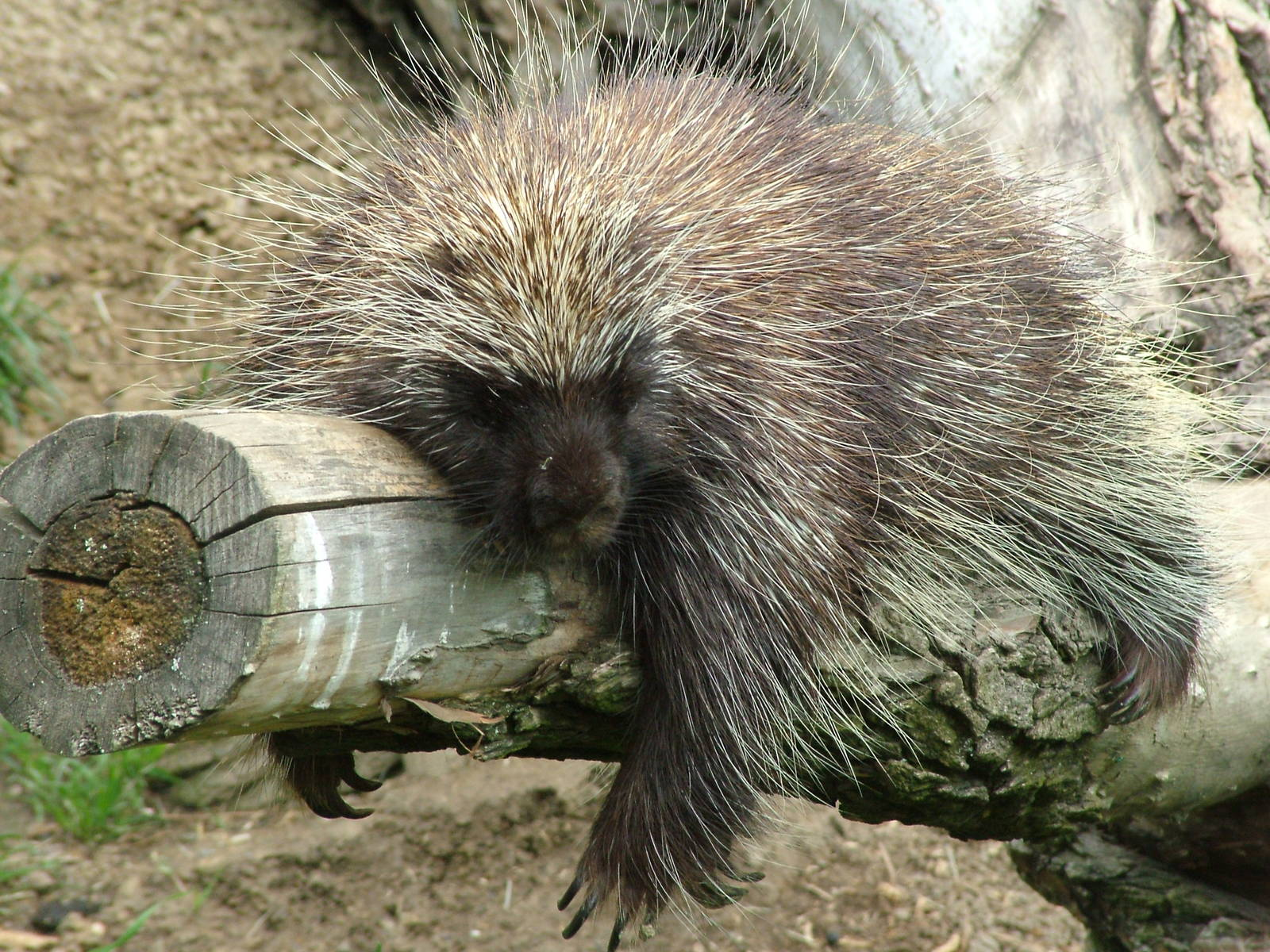 Porcupine for mobile