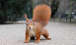 Squirrel widescreen for desktop