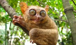 Tarsier widescreen for desktop