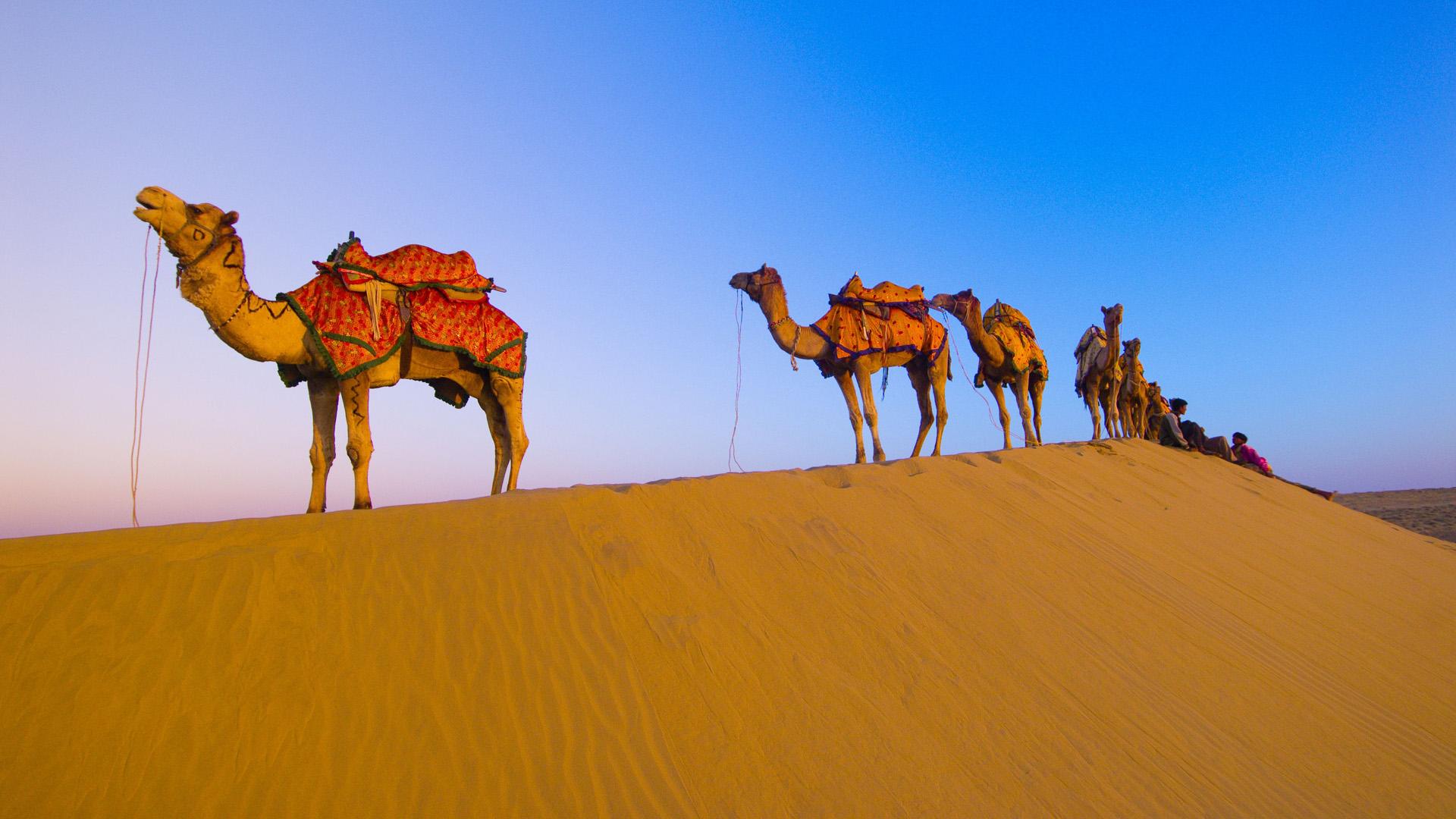 Camel Wide wallpapers