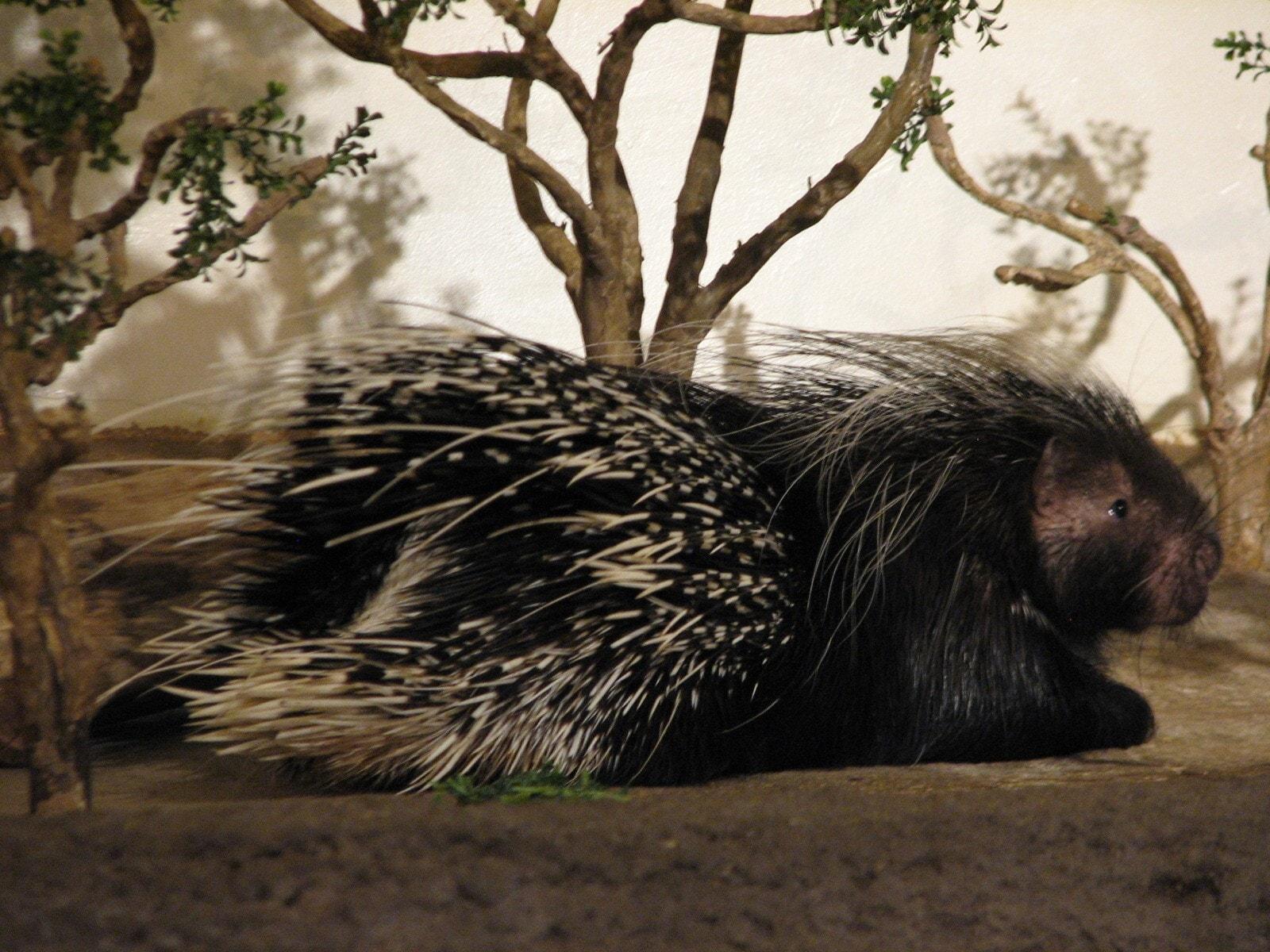 Porcupine High
