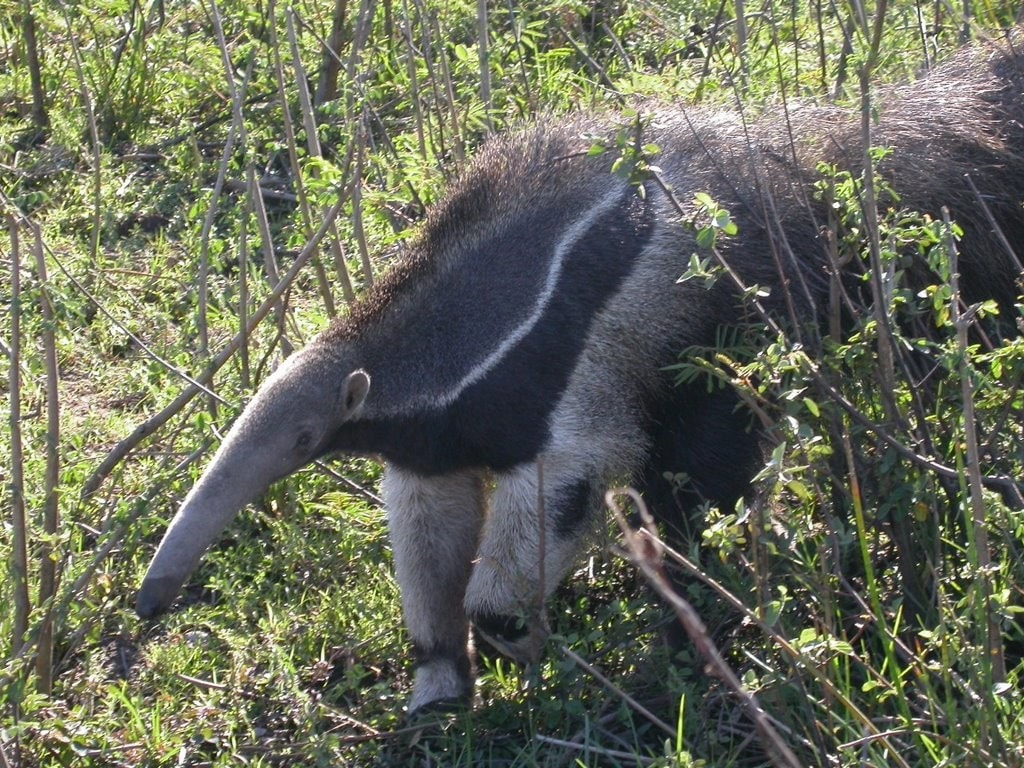 Ant-Eater HD
