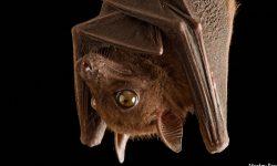 Bat High