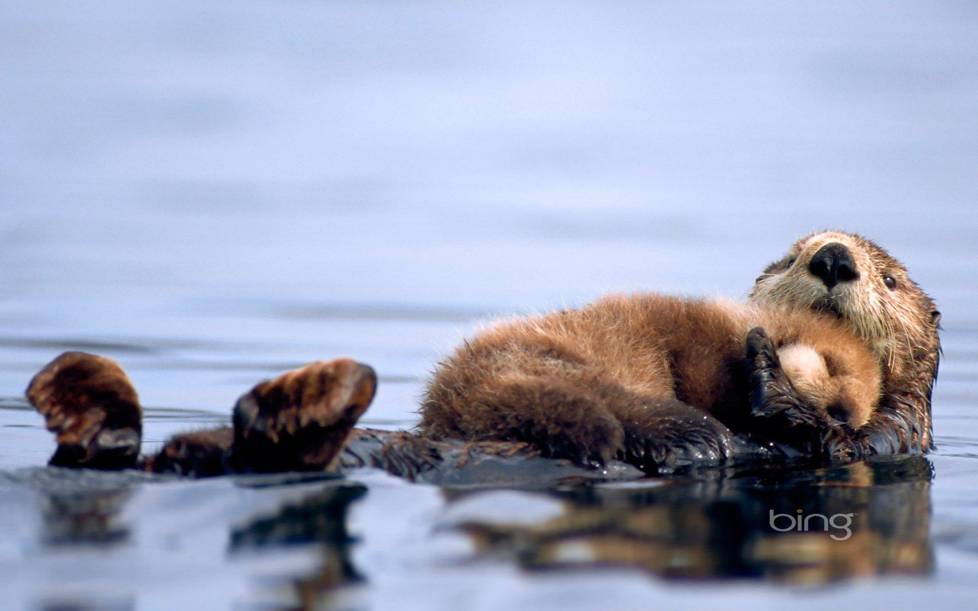 Otter High
