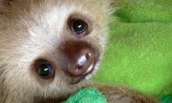 Sloth High