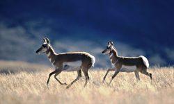 Springbok High