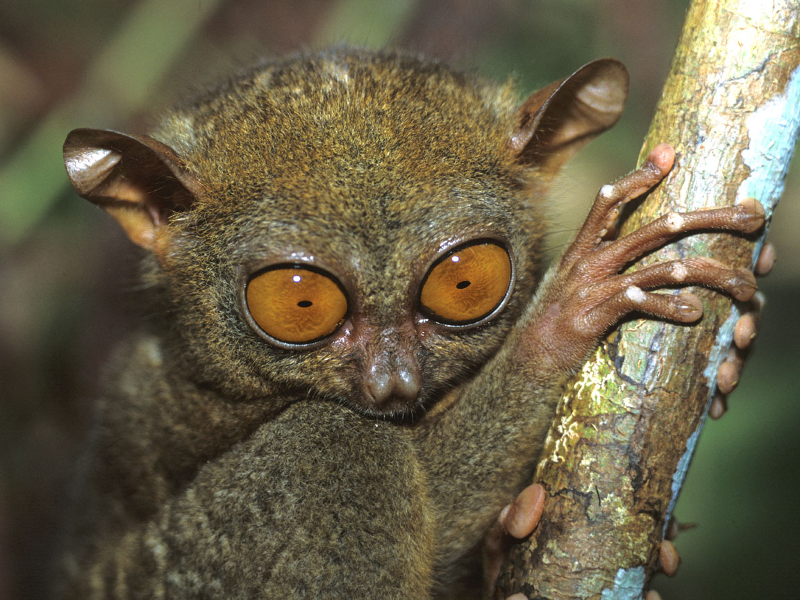 Tarsier High
