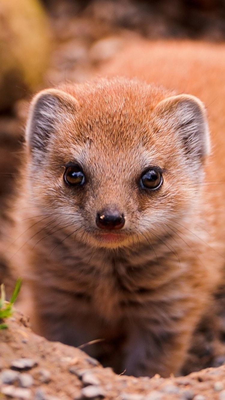 Mongoose HD