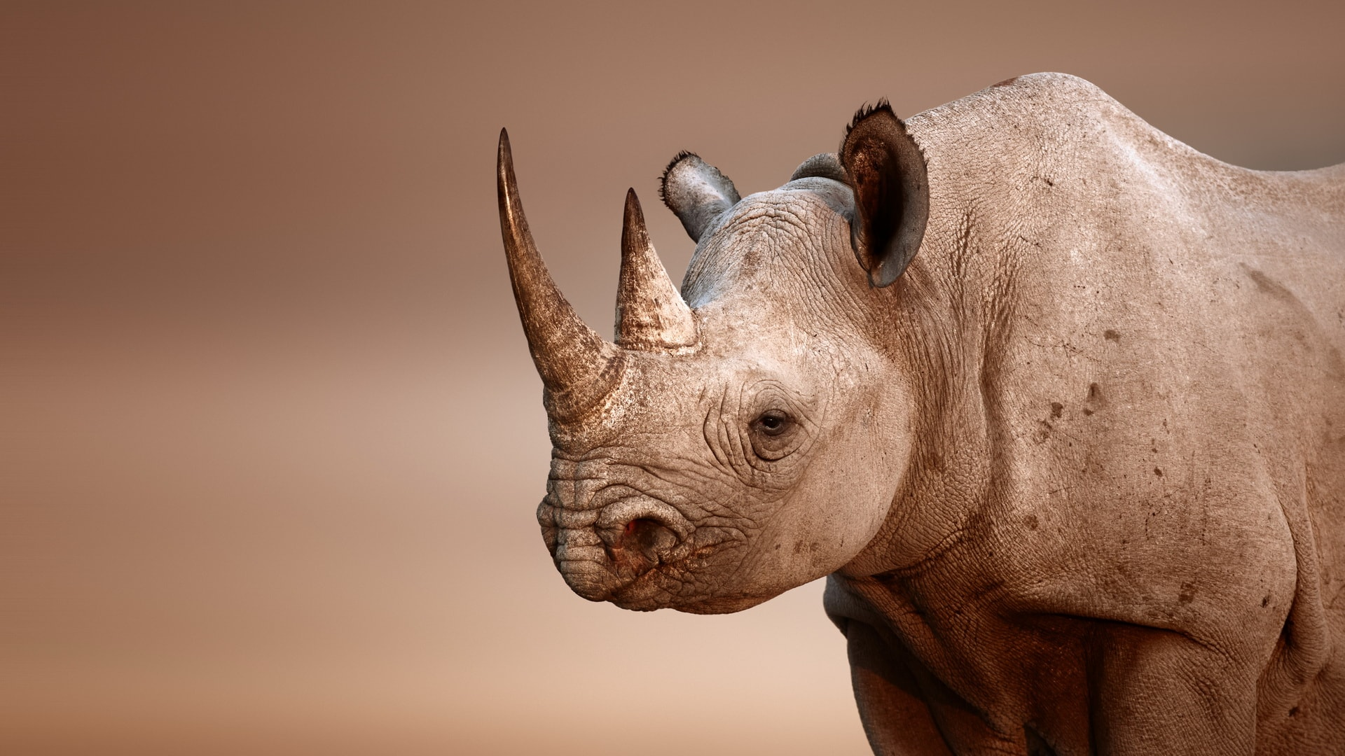 Rhinoceros HD