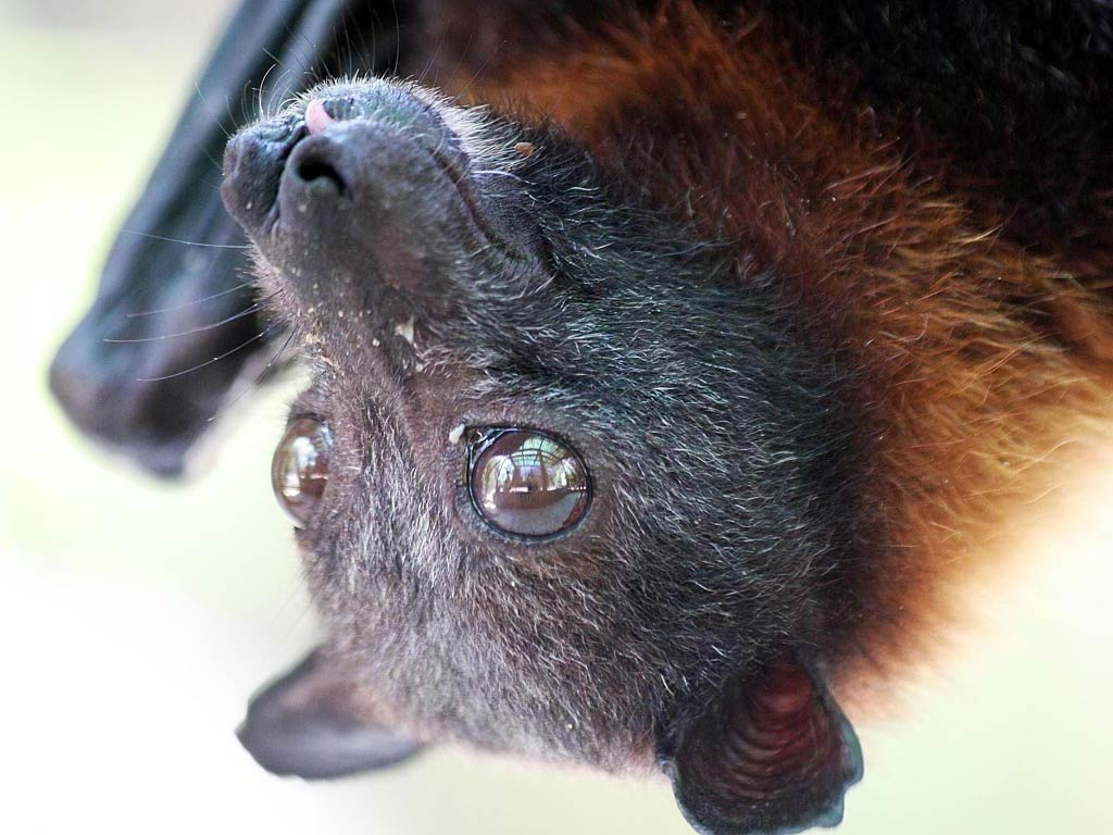 Bat Free