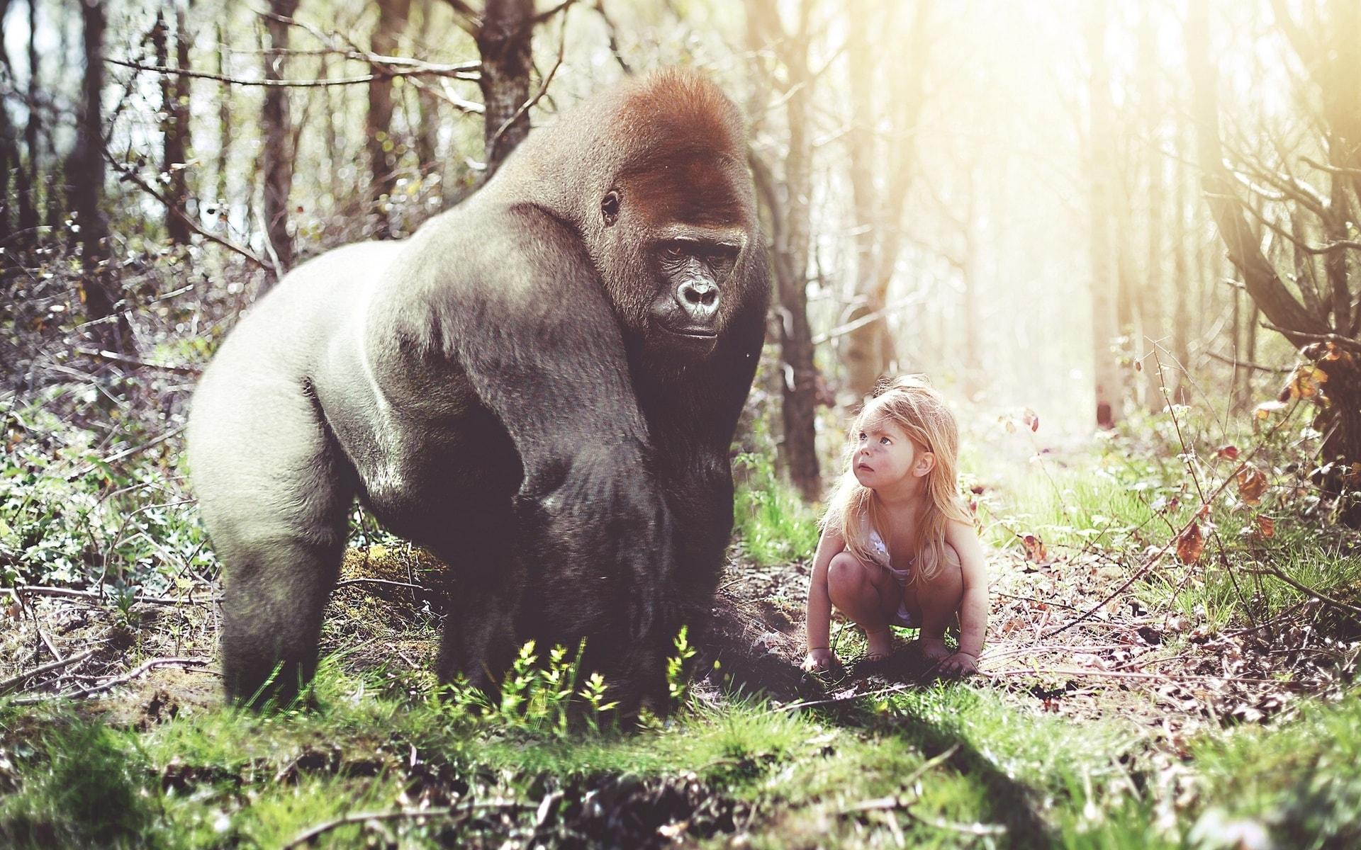 Gorilla Free