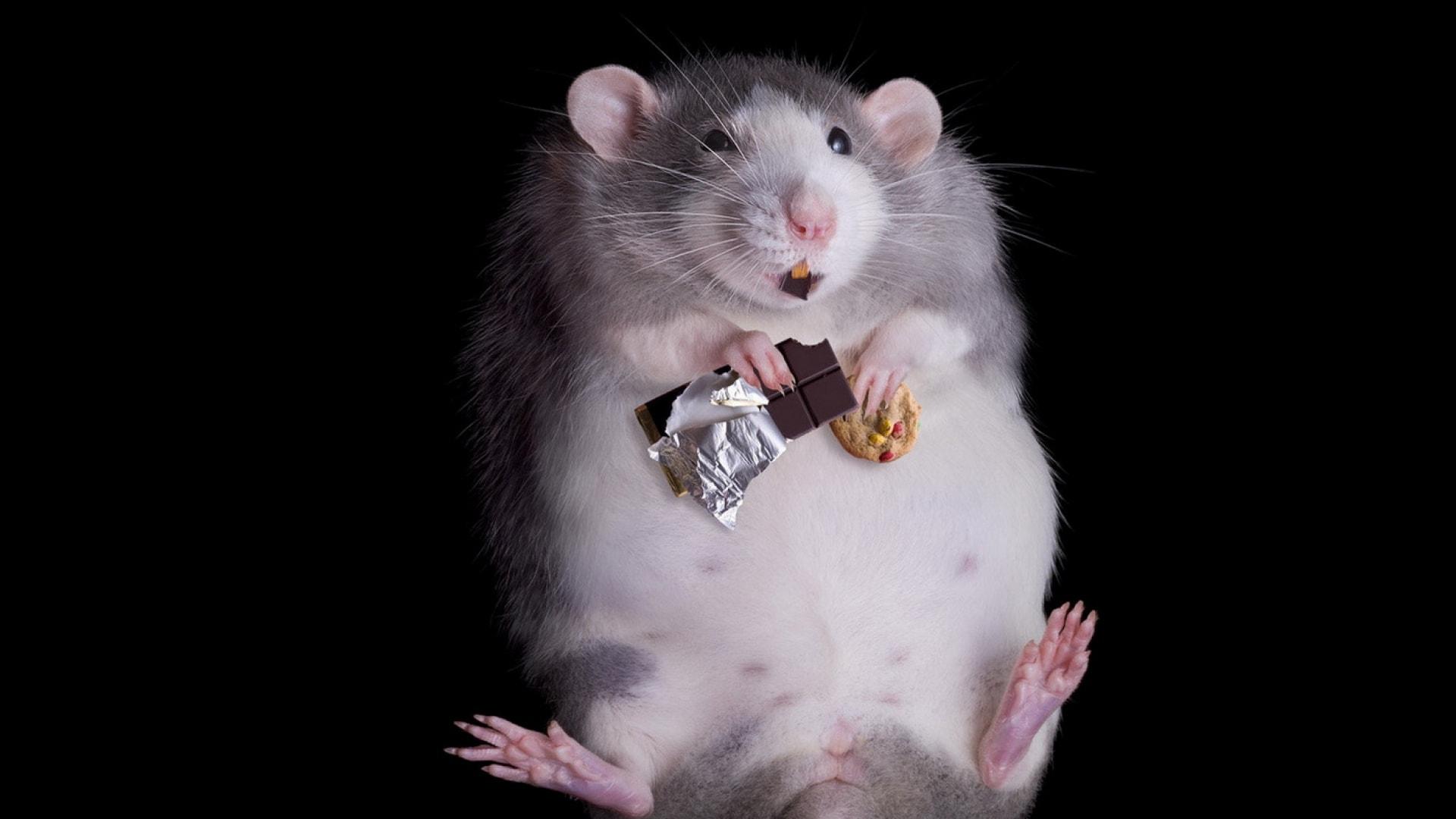 Rat Free