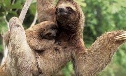 Sloth Free