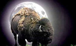 Buffalo widescreen
