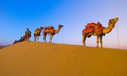 Camel widescreen