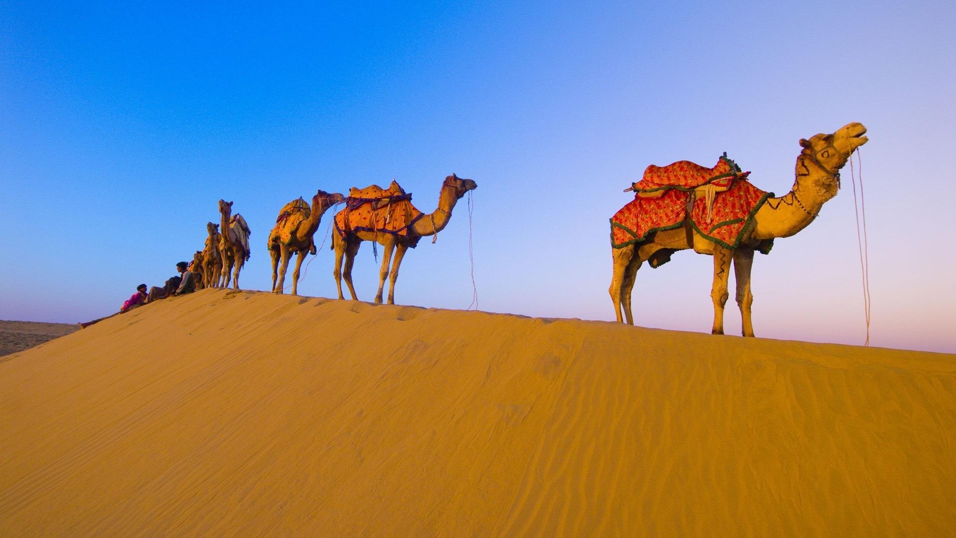 Camel widescreen