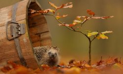 Hedgehog widescreen