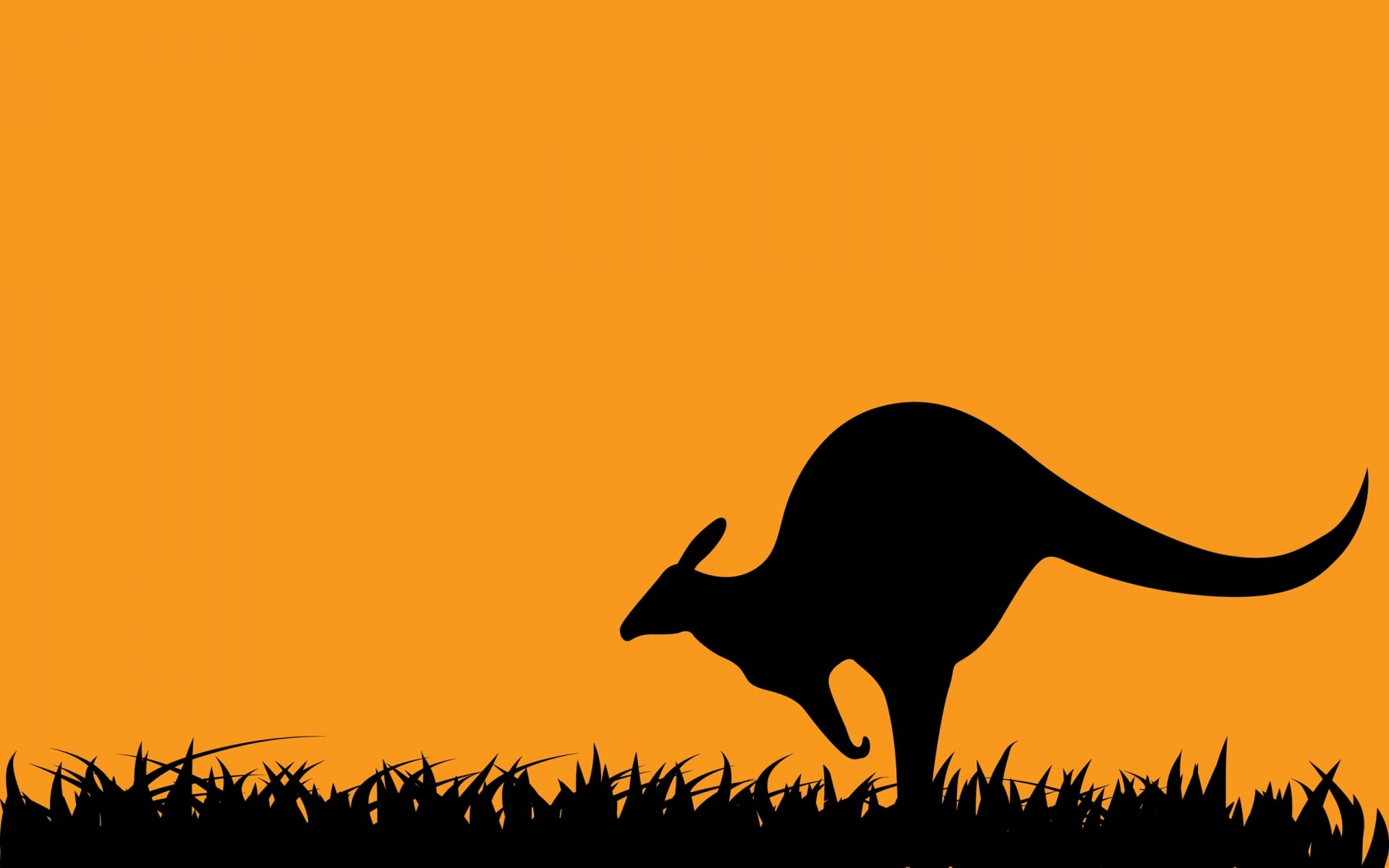 Kangaroo widescreen