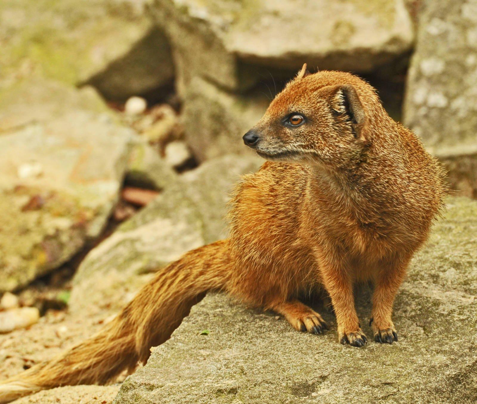 Mongoose widescreen