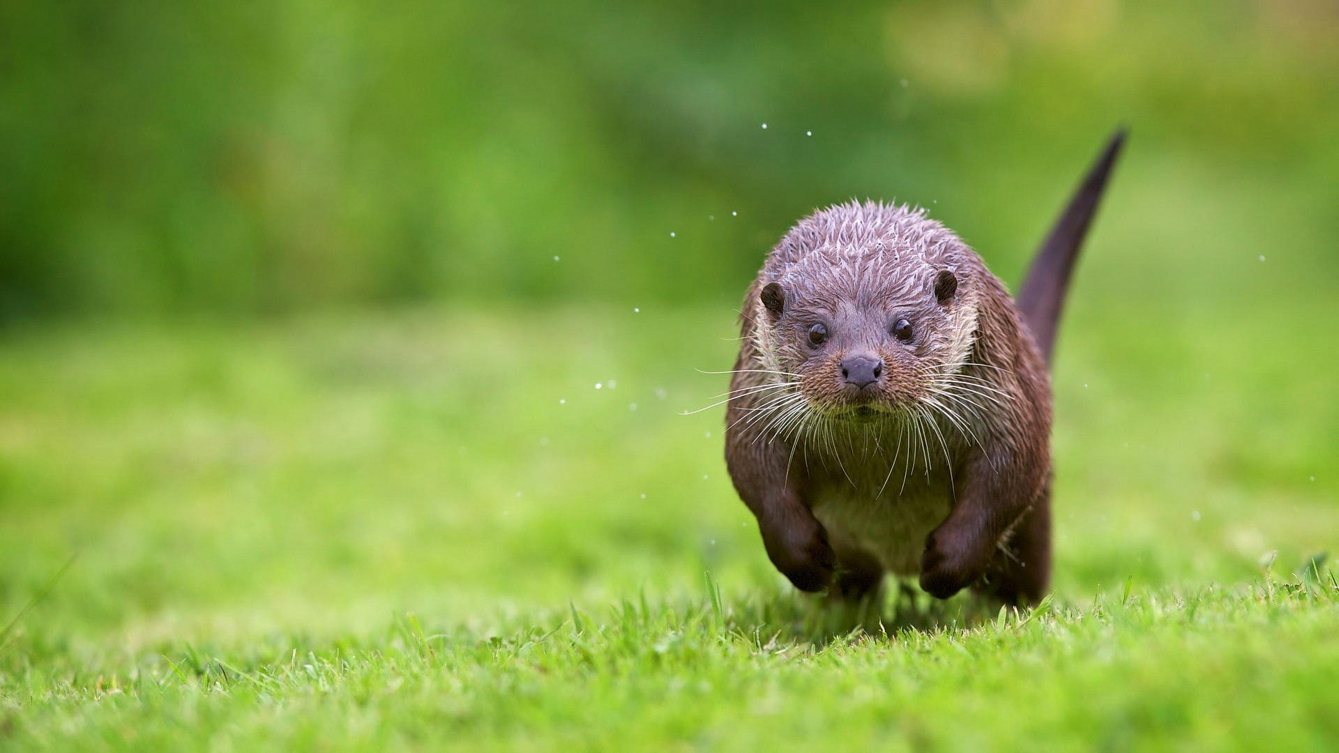 Otter Hd Wallpapers 7wallpapers Net