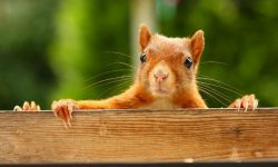 Squirrel widescreen