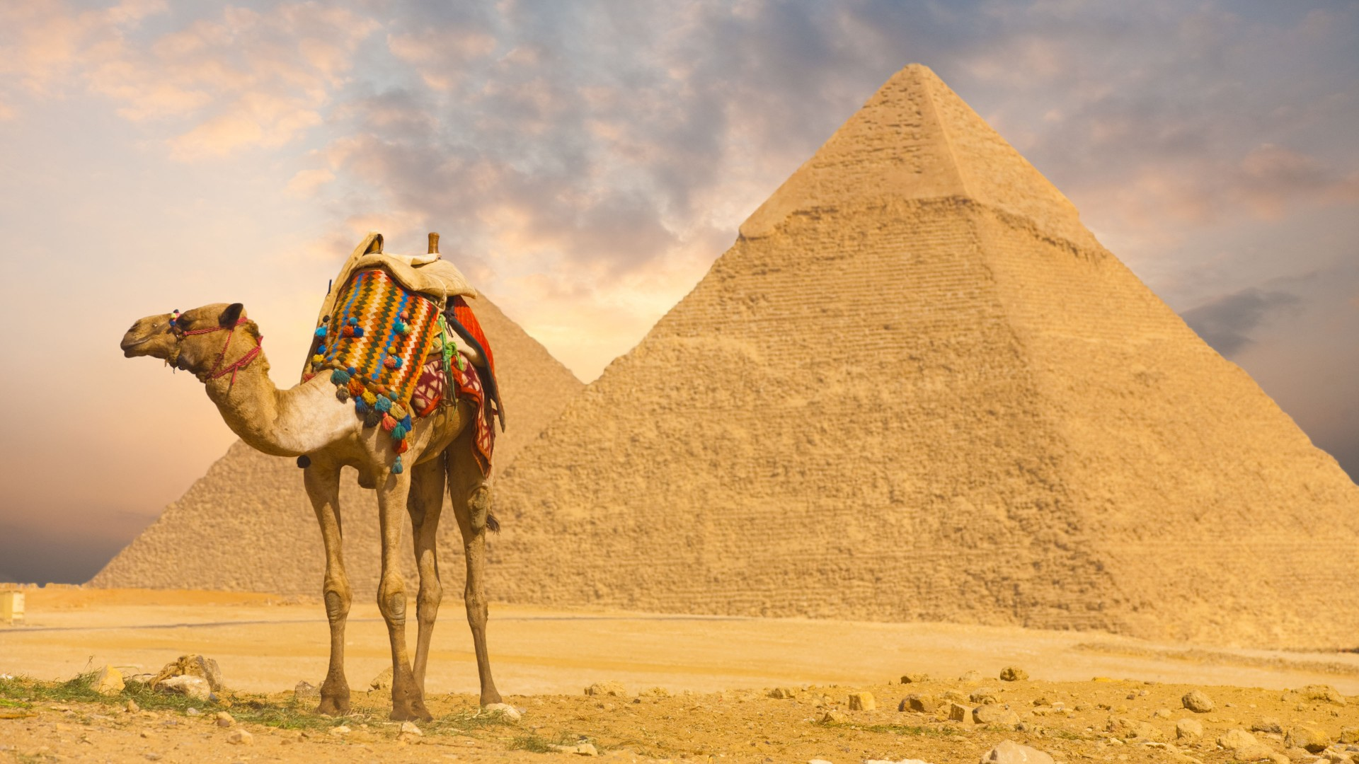 Camel Wallpapers hd