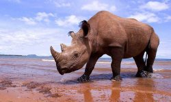 Rhinoceros Wallpapers hd