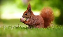 Squirrel Wallpapers hd