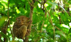 Tarsier Backgrounds