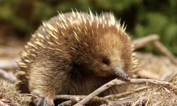 Echidna Pictures