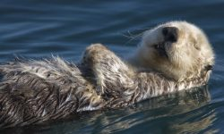 Otter Pictures