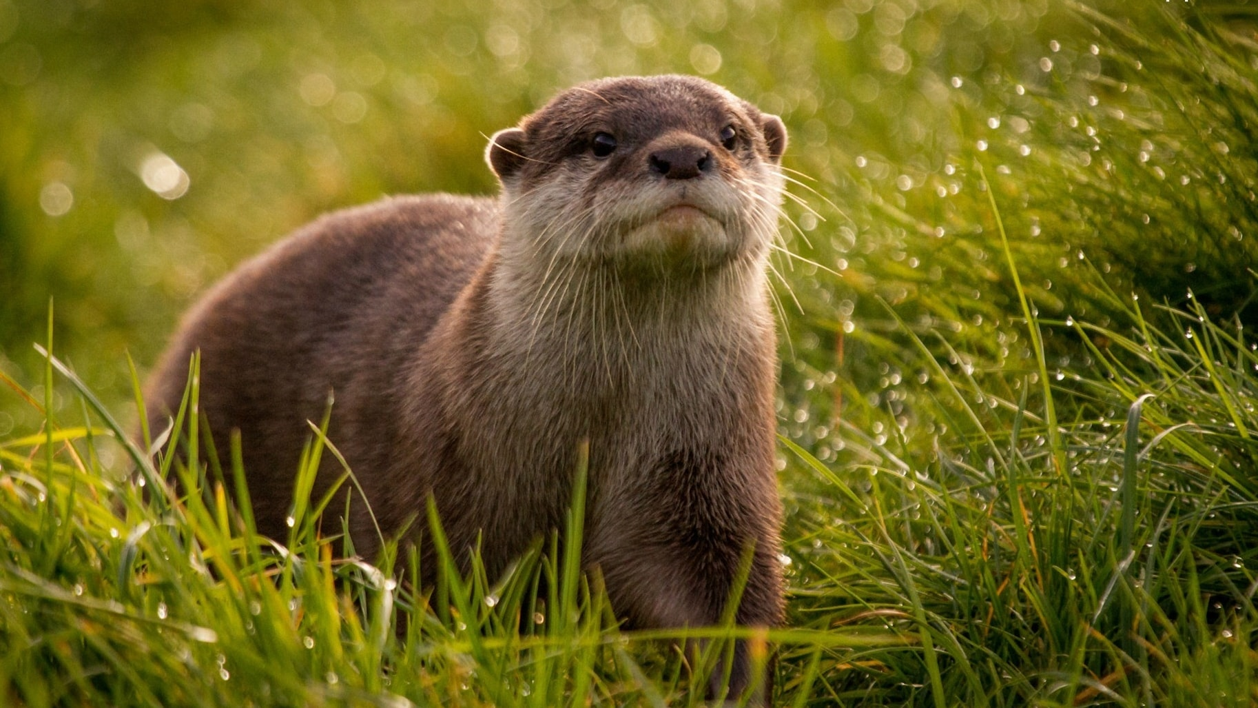 Otter HQ wallpapers