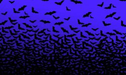 Bat Background